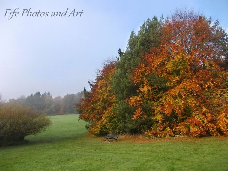 Late Autumn Colours in Balbirnie Park